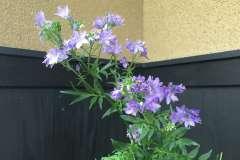 当館に咲く花忍